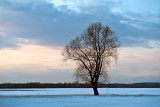 Lonely Tree At The Frozen River