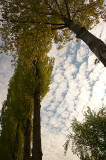 Spring Trees In Clouds
