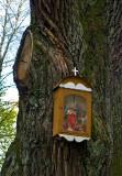 Box Shrine On An Oak Tree