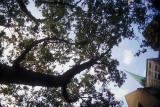 Trees in the church Reala