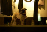 Show window dog @f1.2 M8
