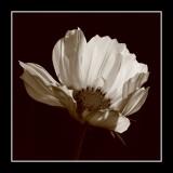 Monochrome Flower Gallery