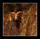 Rocky Mountain Peek-A-Boo
