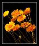 A Desert Bouquet