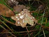 dew  on leaf.jpg