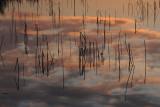 pink clouds in water.jpg