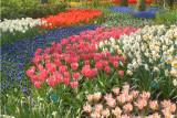 DSC_9527  Mixed colours
