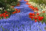 DSC_9540  Flowerpath in blue