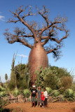 PLANT - BAOBAB - ADANSONIA RUBROSTIPA - BOTTLE BAOBAB - BERENTY RESERVE MADAGASCAR (3).JPG