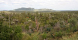 SPINY FOREST PLANT COMMUNITY - ANDOHAHELA NATIONAL PARK