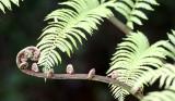 PLANT - FERN - MANTADIA NATIONAL PARK MADAGASCAR (3).JPG
