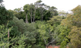 PLANT - TAMARAND GALLERY FOREST - BERENTY RESERVE MADAGASCAR.JPG