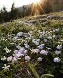 Flora of the Olympic Peninsula