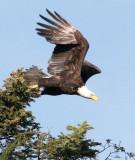 Birds of the Olympic Peninsula