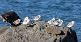 BIRD - SANDERLINGS - EDIZ HOOK PA HARBOR (26).jpg