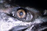 FISH - SALMON CULTURE (4).jpg