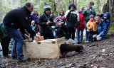 MUSTELID - FISHER - RELEASE ON 21 DECEMBER 2009 AT WISKER BEND TRAIL HEAD AND SOL DUC CAMPGROUND ONP (13).JPG