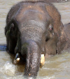 LAMPANG - ELEPHANT CONSERVATION CENTER - CHRISTMAS IN THAILAND TRIP 2008 (87).JPG