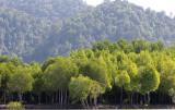 KOH LANTA - MANGROVE FORESTS (4).JPG
