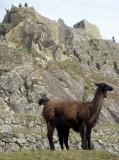 PERU - MACCHU PICCHU Y.jpg