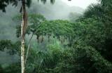 BIRD - OROPENDOLA NESTS - PANAMA.jpg