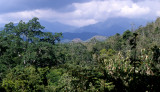 PANAMA - RAINFOREST VIEW A.jpg