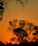 PANTANAL - SUNSET.jpg