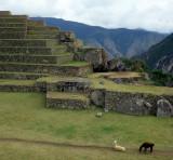 PERU - MACCHU PICCHU W1.jpg