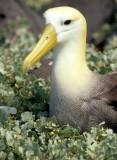 BIRD - ALBATROSS - WAVED D.jpg
