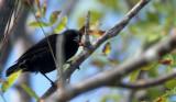 BIRD - FINCH - TOOL USING - GALAPAGOS.jpg
