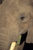 ELEPHANT - SERENGETI 6.jpg