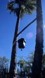 KALAHARI - JACKS CAMP SHOWER.jpg