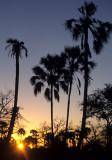 KALAHARI - SUNSET.jpg