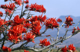 RSA - BLYDE RIVER CANYON - RED SUCCULENT.jpg