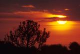 SERENGETI SUNSET 6.jpg