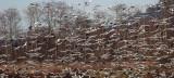 BIRD - GOOSE - SNOW GEESE IN SKAGIT VALLEY - MOUNT VERNON WASHINGTON AREA (59).jpg