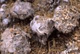 BIRD - OWL - PELLETS - ANZA BORREGO.jpg