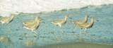 BIRD - WILLETS - POINT REYES SURF.jpg