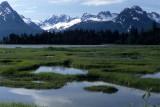 ALASKA - TETSLIN NWR - MIXED TAIGA - PICEA GLAUCA WHITE SPRUCE AND BLACK SPRUCE B.jpg