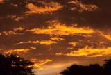 ARIZONA - MADERA CANYON - RESEARCH - SUNSET B.jpg