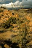 ARIZONA - OCOTILLO JUNIPER WOODLAND - NORTHERN DESERT.jpg