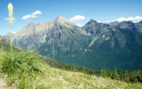 MONTANA - GLACIER - BEAR GRASS.jpg
