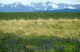 MONTANA - GREAT PLAINS GRASSLAND.jpg