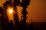 CALIFORNIA - MOJAVE NATIONAL MONUMENT (3).jpg