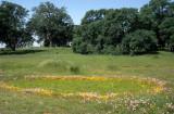 CALIFORNIA - PHOENIX FIELDS - VERNAL POOLS - QUERCUS LOBATA AND WILDFLOWERS A.jpg