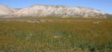 CARRIZO PLAIN NATIONAL MONUMENT CALIFORNIA VIEWS OF THE REGION - ROAD TRIP 2010 (3).JPG
