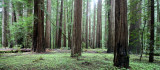AVENUE OF THE GIANTS - HUMBOLDT REDWOODS STATE PARK CAL - ALBEE CREEK CAMPGROUNDS AREA (14).JPG