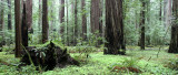 AVENUE OF THE GIANTS - HUMBOLDT REDWOODS STATE PARK CAL - ALBEE CREEK CAMPGROUNDS AREA (16).JPG
