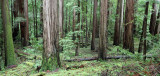 AVENUE OF THE GIANTS - HUMBOLDT REDWOODS STATE PARK CAL - ALBEE CREEK CAMPGROUNDS AREA (28).JPG