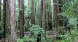 AVENUE OF THE GIANTS - HUMBOLDT REDWOODS STATE PARK CAL - ALBEE CREEK CAMPGROUNDS AREA (40).JPG